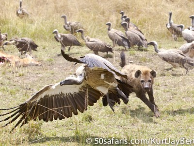 Selfish hyaena