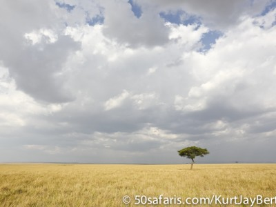 Solitary tree in the Masai Mara