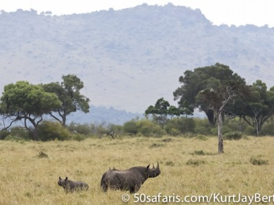 Black rhino and calf in the Masai Mara