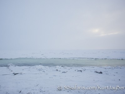 Polar Bear, ice bear, safari, photo safari, photographic safari, photo tour, wildlife photographic safari, canada, churchill, exclusive, kurt jay bertels, polar bear safari, 50 safaris, 50 photographic safaris, northern lights, aurora borealis, forest, tundra