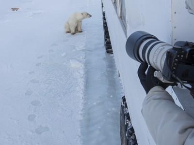 polar bear, fox, arctic fox, red fox, ice bear, bear, canada, churchill, hudson bay, ice, freeze, northern lights, aurora borealis, kurt jay bertels, ptarmigan, safari, photo safari, photographic safari, 50 safaris, 50 photographic safaris, photo tour, photo workshop, photo lessons, tundra, tundra buggy