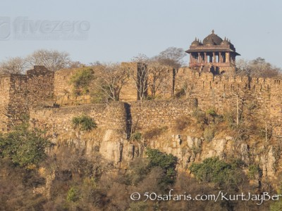 India, tiger, wildlife, safari, photo safari, photo tour, photographic safari, photographic tour, photo workshop, wildlife photography, 50 safaris, 50 photographic safaris, kurt jay bertels, ranthambore fort, fort
