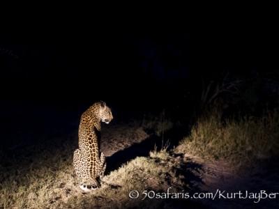 South Africa, wildlife, safari, photo safari, photo tour, photographic safari, photographic tour, photo workshop, wildlife photography, 50 safaris, 50 photographic safaris, kurt jay bertels, leopard, female, night