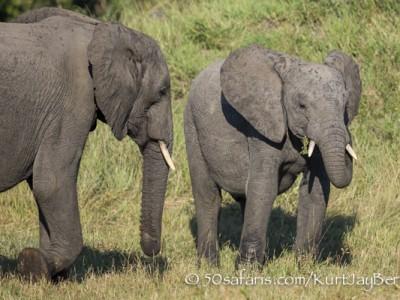 South Africa, wildlife, safari, photo safari, photo tour, photographic safari, photographic tour, photo workshop, wildlife photography, 50 safaris, 50 photographic safaris, kurt jay bertels, elephant, calf, young, herd