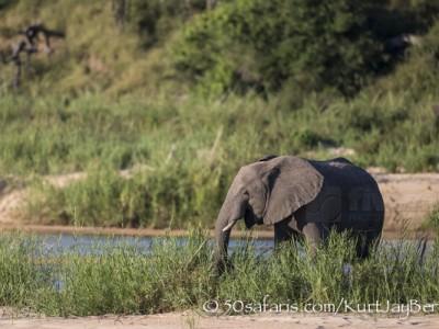 South Africa, wildlife, safari, photo safari, photo tour, photographic safari, photographic tour, photo workshop, wildlife photography, 50 safaris, 50 photographic safaris, kurt jay bertels, elephant, river