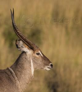 South Africa, wildlife, safari, photo safari, photo tour, photographic safari, photographic tour, photo workshop, wildlife photography, 50 safaris, 50 photographic safaris, kurt jay bertels,