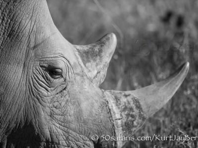 South Africa, wildlife, safari, photo safari, photo tour, photographic safari, photographic tour, photo workshop, wildlife photography, 50 safaris, 50 photographic safaris, kurt jay bertels, white rhino, horns