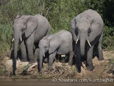 South Africa, wildlife, safari, photo safari, photo tour, photographic safari, photographic tour, photo workshop, wildlife photography, 50 safaris, 50 photographic safaris, kurt jay bertels, elephant, herd, drinking