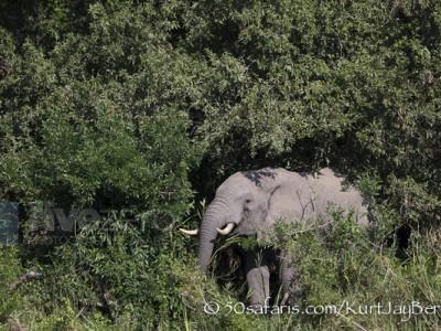 South Africa, wildlife, safari, photo safari, photo tour, photographic safari, photographic tour, photo workshop, wildlife photography, 50 safaris, 50 photographic safaris, kurt jay bertels, elephant, feeding