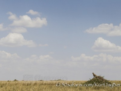 Kenya, great migration, migration, kill, wildebeest, calendar, crocodile, when to go, best, wildlife, safari, photo safari, photo tour, photographic safari, photographic tour, photo workshop, wildlife photography, 50 safaris, 50 photographic safaris, kurt jay bertels, cheetah, termite mound