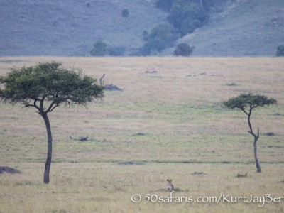 Kenya, great migration, migration, kill, wildebeest, calendar, crocodile, when to go, best, wildlife, safari, photo safari, photo tour, photographic safari, photographic tour, photo workshop, wildlife photography, 50 safaris, 50 photographic safaris, kurt jay bertels, sunset, lioness, lion, hunting