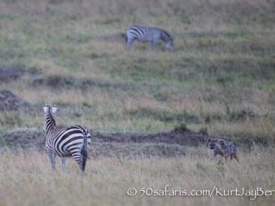 Kenya, great migration, migration, kill, wildebeest, calendar, crocodile, when to go, best, wildlife, safari, photo safari, photo tour, photographic safari, photographic tour, photo workshop, wildlife photography, 50 safaris, 50 photographic safaris, kurt jay bertels, sunset, lioness, lion, hunting, zebra, hyaena