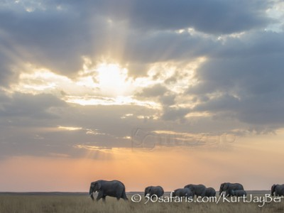 Kenya, great migration, migration, kill, wildebeest, calendar, crocodile, when to go, best, wildlife, safari, photo safari, photo tour, photographic safari, photographic tour, photo workshop, wildlife photography, 50 safaris, 50 photographic safaris, kurt jay bertels, amboseli, amboseli national park, elephant, sunset, clouds, beautiful