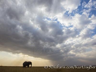 Kenya, great migration, migration, kill, wildebeest, calendar, crocodile, when to go, best, wildlife, safari, photo safari, photo tour, photographic safari, photographic tour, photo workshop, wildlife photography, 50 safaris, 50 photographic safaris, kurt jay bertels, amboseli, amboseli national park, elephant silhouette, storm clouds, sunset