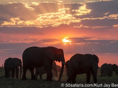 botswana, okavango delta, okavango, wilderness, wilderness safaris, calendar, when to go, best, wildlife, safari, photo safari, photo tour, photographic safari, photographic tour, photo workshop, wildlife photography, 50 safaris, 50 photographic safaris, kurt jay bertels, lion, kill, buffalo, relentless enemies, derek joubert, elephants, sunset, silhouette