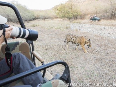 tiger safari, india, ranthambore, tiger, calendar, when to go, best, wildlife, safari, photo safari, photo tour, photographic safari, photographic tour, photo workshop, wildlife photography, 50 safaris, 50 photographic safaris, kurt jay bertels, tiger, male, large, adult, gypsy, canter, jeep