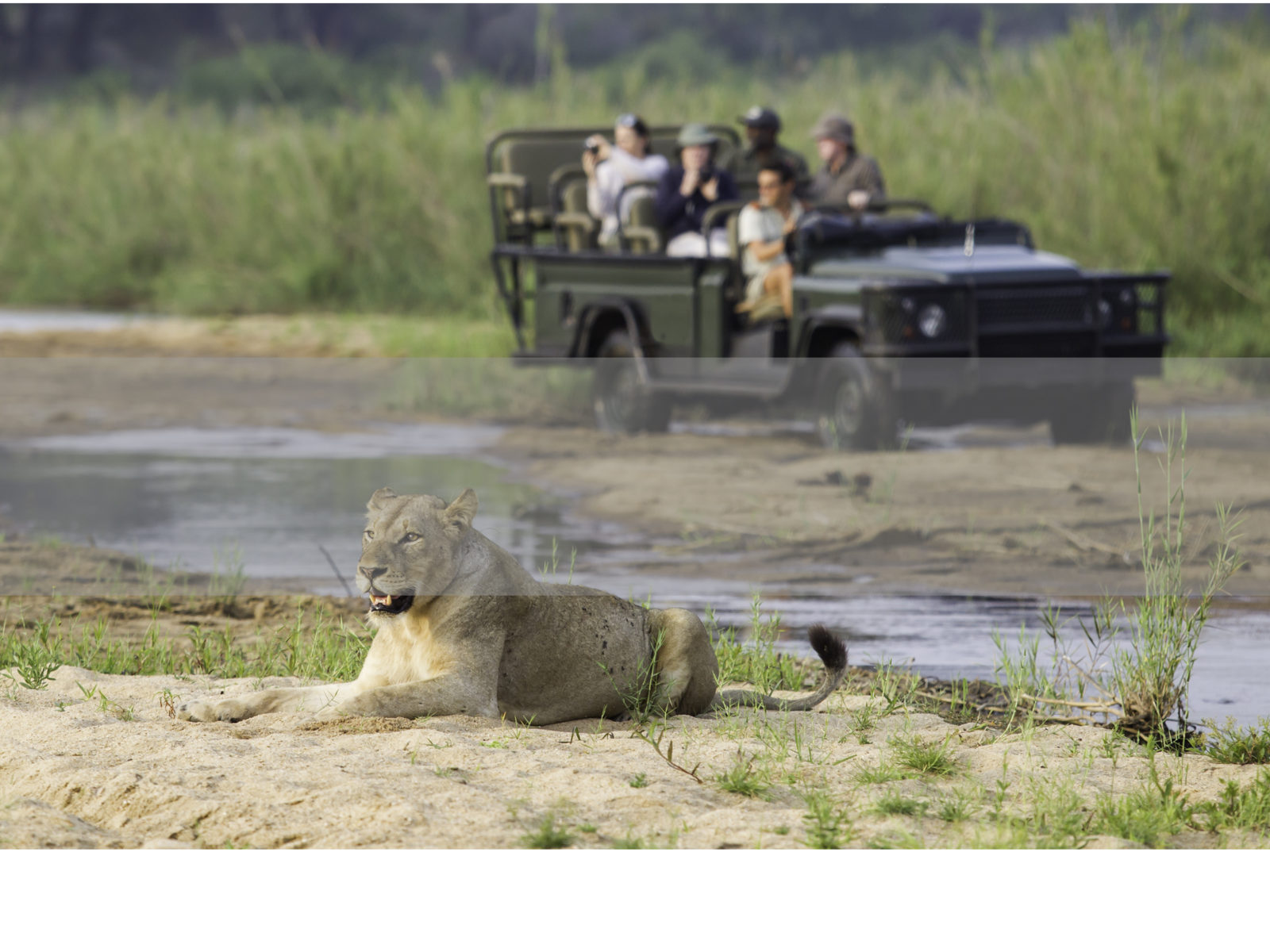 South Africa Safari, FiveZero safaris