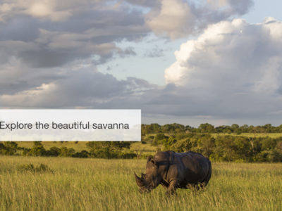 South Africa safari, five zero safaris