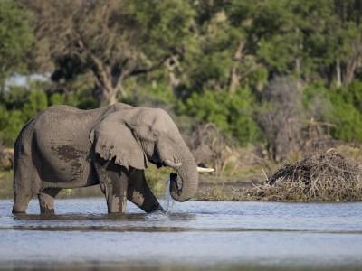 photo safari, fivezero safaris, photographic safari, wildlife, kurt jay bertels, elephant, botswana, drinking