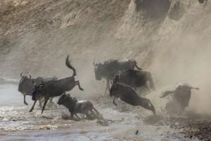 Five-Zero-Safaris_Great-Migration-Safari_FI7R7543