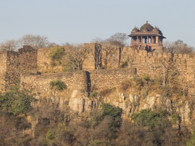 photo safari, fivezero safaris, photographic safari, wildlife, kurt jay bertels, india, fort, ranthambore