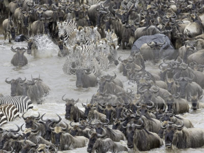 Permalink to The Great Migration Safari in Kenya