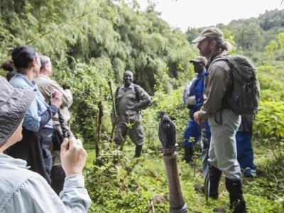 gorilla, mountain gorilla, rwanda, photo safari, photographic safari, wildlife, kurt jay bertels, safari, luxury, five zero safaris, armed guards