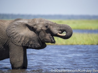Botswana, chobe river, calendar, when to go, best, wildlife, safari, photo safari, photo tour, photographic safari, photographic tour, photo workshop, wildlife photography, 50 safaris, 50 photographic safaris, kurt jay bertels, elephant, drinking
