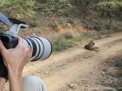 calendar, when to go, best, wildlife, safari, photo safari, photo tour, photographic safari, photographic tour, photo workshop, wildlife photography, five zero safaris, five zero photographic safaris, fivezero, kurt jay bertels, tiger safari, tiger, photograph, gypsy, india
