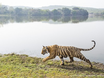 calendar, when to go, best, wildlife, safari, photo safari, photo tour, photographic safari, photographic tour, photo workshop, wildlife photography, five zero safaris, five zero photographic safaris, fivezero, kurt jay bertels, tiger safari, india, tiger, bengal tiger, lake