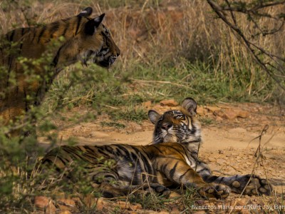 calendar, when to go, best, wildlife, safari, photo safari, photo tour, photographic safari, photographic tour, photo workshop, wildlife photography, five zero safaris, five zero photographic safaris, fivezero, kurt jay bertels, tiger safari, india, bengal tiger, tiger