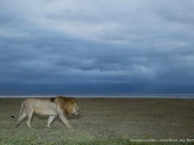 photo safari, photographic safari, wildlife photographic safari, photo tour, photo workshop, when to go, best, fivezero safaris, five zero, safari, kurt jay bertels, tanzania, ngorogoro crater, lion