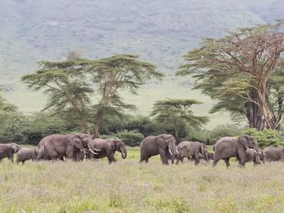 photo safari, photographic safari, wildlife photographic safari, photo tour, photo workshop, when to go, best, fivezero safaris, five zero, safari, kurt jay bertels, tanzania, ngorogoro crater, elephants