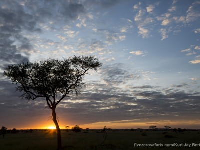 photo safari, photographic safari, wildlife photographic safari, photo tour, photo workshop, when to go, best, fivezero safaris, five zero, safari, kurt jay bertels, tanzania, serengeti national park, sunrise, acacia