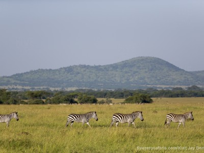 photo safari, photographic safari, wildlife photographic safari, photo tour, photo workshop, when to go, best, fivezero safaris, five zero, safari, kurt jay bertels, tanzania, serengeti national park, zebra, migration