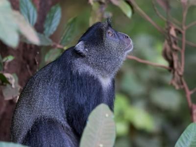 photo safari, photographic safari, wildlife photographic safari, photo tour, photo workshop, when to go, best, fivezero safaris, five zero, safari, kurt jay bertels, tanzania, blue monkey, lake manyara