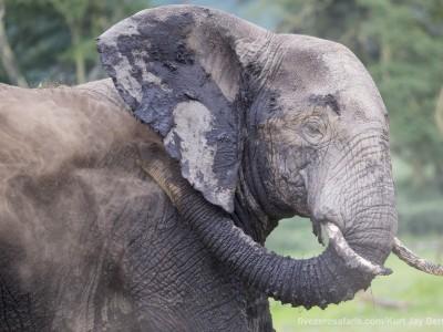 photo safari, photographic safari, wildlife photographic safari, photo tour, photo workshop, when to go, best, fivezero safaris, five zero, safari, kurt jay bertels, tanzania, ngorogoro crater, elephant, dusting