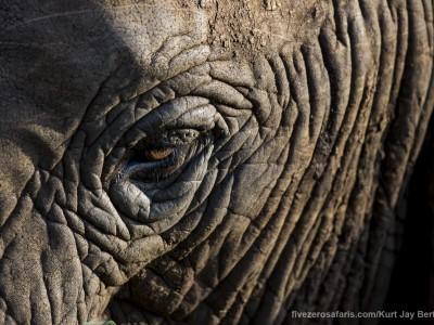 photo safari, photographic safari, wildlife photographic safari, photo tour, photo workshop, when to go, best, fivezero safaris, five zero, safari, kurt jay bertels, tanzania, elephant, eye, lake manyara
