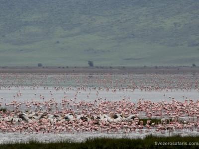 photo safari, photographic safari, wildlife photographic safari, photo tour, photo workshop, when to go, best, fivezero safaris, five zero, safari, kurt jay bertels, tanzania, ngorogoro crater, flamingo, lesser flamingo, pelican