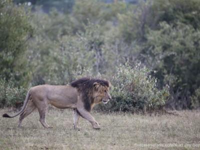 photo safari, photographic safari, wildlife photographic safari, photo tour, photo workshop, when to go, best, fivezero safaris, five zero, safari, kurt jay bertels, kenya, masai mara, lion, male, notch
