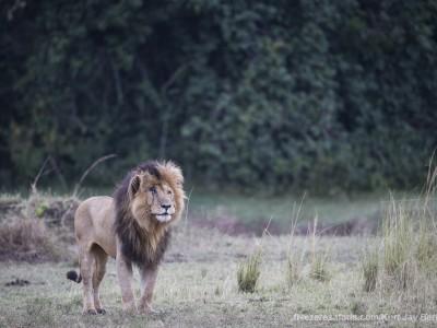 photo safari, photographic safari, wildlife photographic safari, photo tour, photo workshop, when to go, best, fivezero safaris, five zero, safari, kurt jay bertels, kenya, masai mara, lion, notch, male