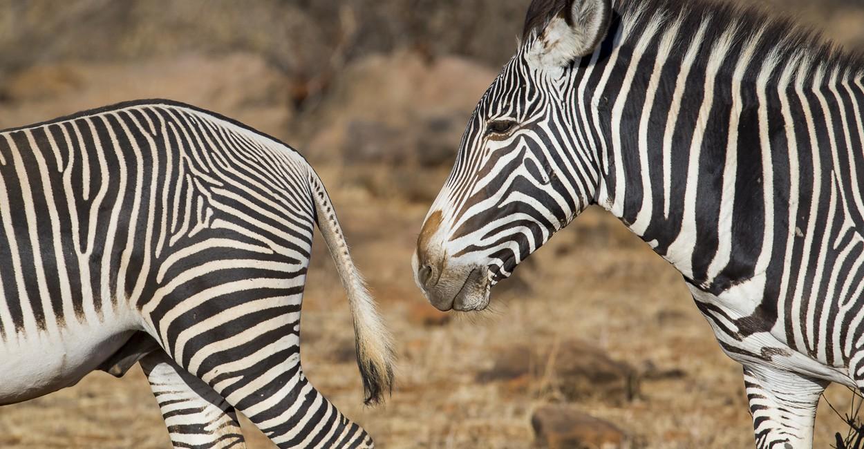 Permalink to The Great Migration Safari: Day 3 Samburu extension