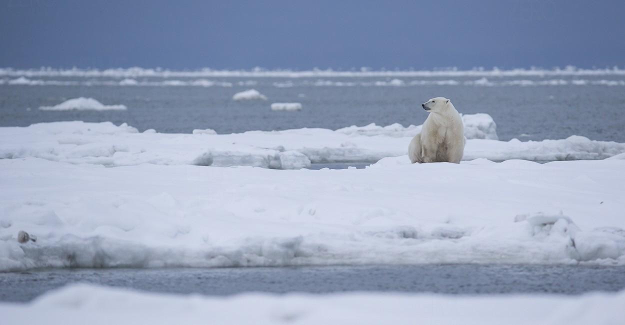Permalink to The Polar Bear Safari 2015: Day 5