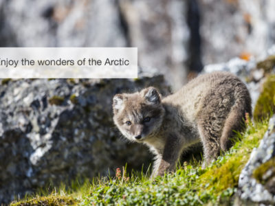 The Arctic Safari, FiveZero Safaris