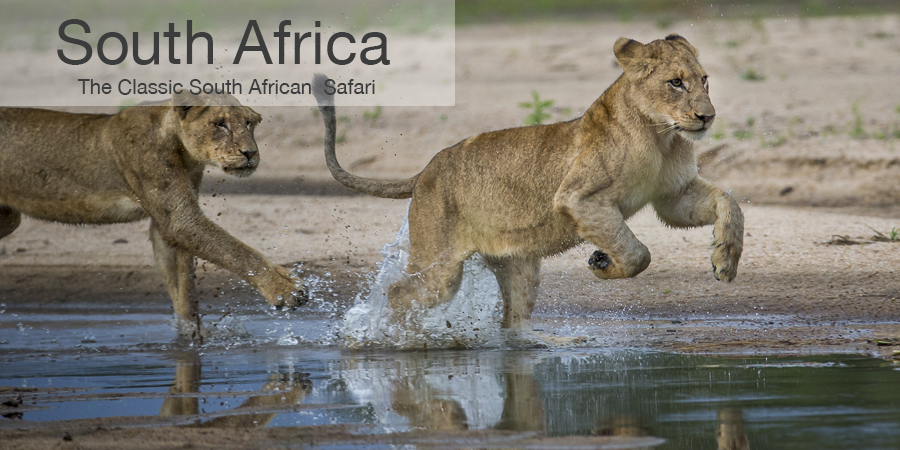 FiveZero Safaris, safari, africa, South Africa, lion cub