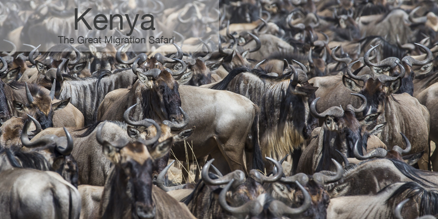 FiveZero Safaris, safari, africa, kenya, great migration, wildebeest