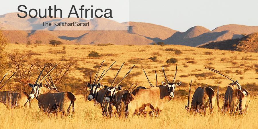 FiveZero Safaris, safari, africa, South Africa, oryx, gemsbok