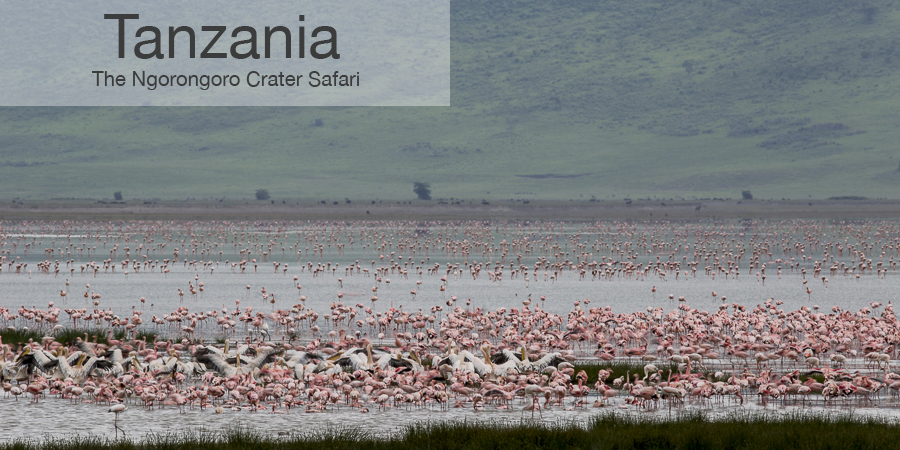 FiveZero Safaris, safari, africa, tanzania, ngorongoro crater