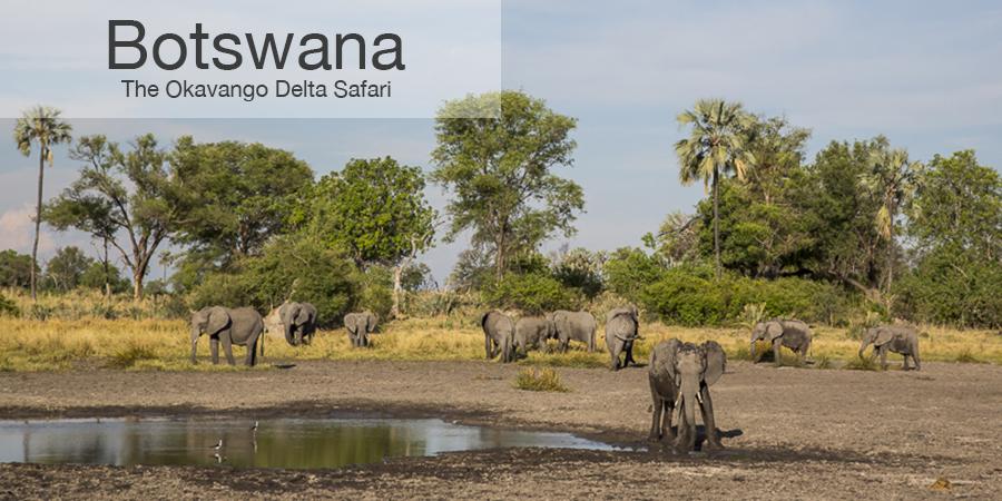 FiveZero Safaris, safari, africa, Botswana, elephant, Okavango delta