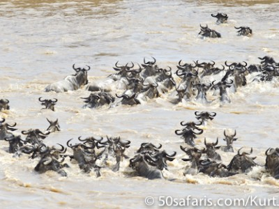 The current sweeps the herd downstream
